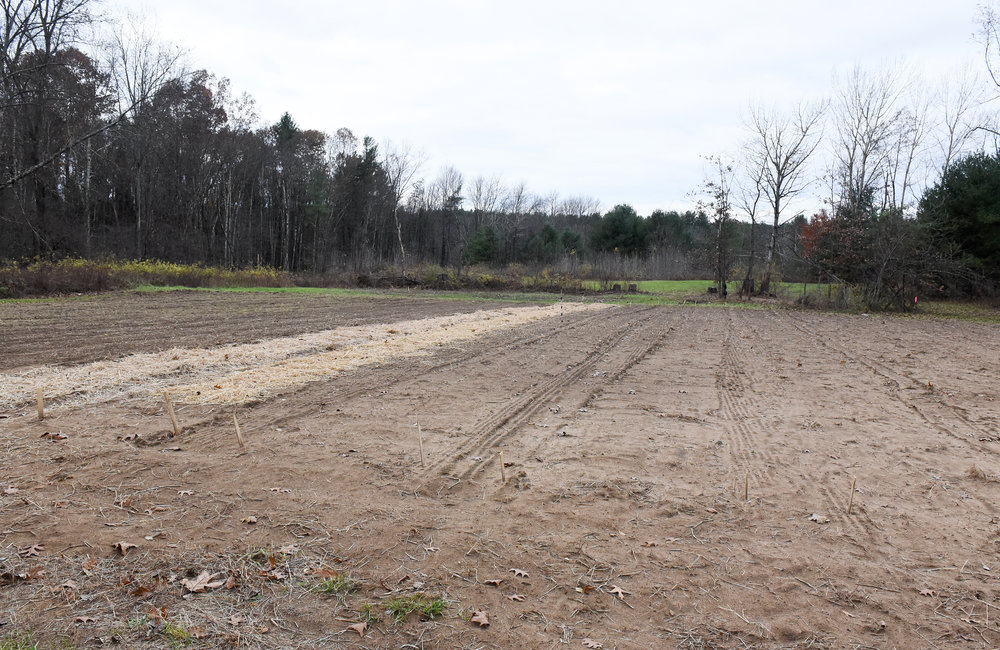 ERICA MILLER/GAZETTE PHOTOGRAPHER   Newly seeded acres for fresh garlic to harvest on property of Bill Higgins, owner of Saratoga Garlic in Northumberland, on Thursday, November 8, 2018.